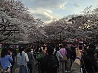 Ueno_koen_20140329_1_2