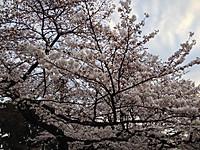 Ueno_koen_20140329_2