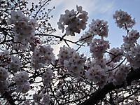 Ueno_koen_20140329_3